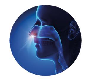 Dos de los principales reservorios de S. aureus: la fosa nasal y la faringe.